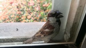 pájaro peleonero