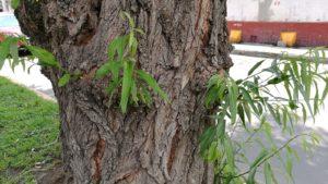 ramas pequeñas